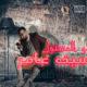 اغنية منو المسئول - سيف عامر